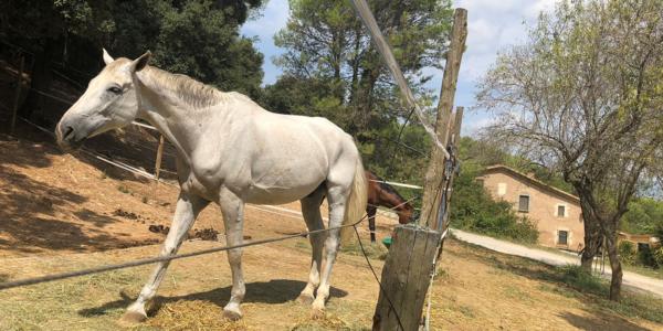 Obrim les inscripcions per a l'escola d'equitació